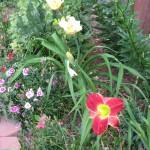 6/9/2008 June Gallery of Flowers (14)