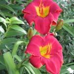 6/9/2008 June Gallery of Flowers (12)