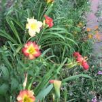 6/9/2008 June Gallery of Flowers (10)
