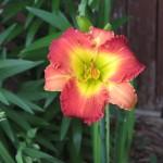 6/9/2008 June Gallery of Flowers (7)