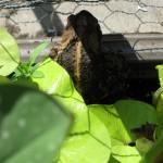 7/6/2009 Visitor in my Coleus (2)