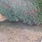 10/27/2009 Rental Home Landscape (26)