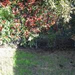 10/27/2009 Rental Home Landscape (25)