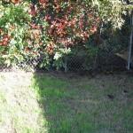10/27/2009 Rental Home Landscape (24)