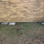 10/27/2009 Rental Home Landscape (22)