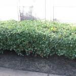 10/27/2009 Rental Home Landscape (21)