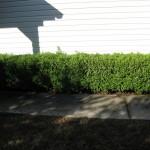 10/27/2009 Rental Home Landscape (20)