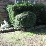 10/27/2009 Rental Home Landscape (19)