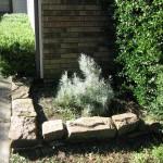 10/27/2009 Rental Home Landscape (14)