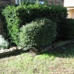 10/27/2009 Rental Home Landscape (9)