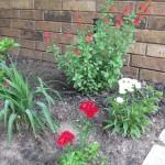 5/14/2010 Spring Flower Beds (55)