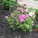 5/14/2010 Spring Flower Beds (54)