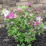 5/14/2010 Spring Flower Beds (53)