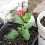 5/14/2010 Spring Flower Beds (41)