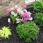 5/14/2010 Spring Flower Beds (40)