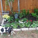 5/14/2010 Spring Flower Beds (33)