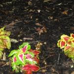 5/14/2010 Spring Flower Beds (30)
