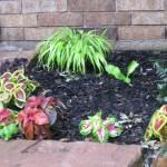 5/14/2010 Spring Flower Beds (27)