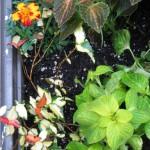 5/14/2010 Spring Flower Beds (15)