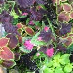 5/14/2010 Spring Flower Beds (14)