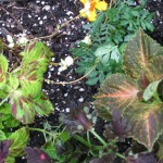 5/14/2010 Spring Flower Beds (13)