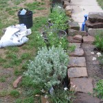 5/14/2010 Spring Flower Beds (12)