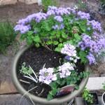 5/14/2010 Spring Flower Beds (11)