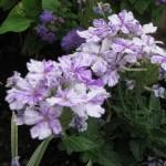 5/14/2010 Spring Flower Beds (4)