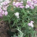 5/14/2010 Spring Flower Beds (1)