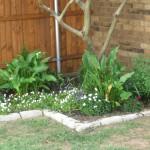 6/17/2010 Purple Garden (1)