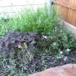 9/28/2010 September garden (5)