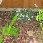 9/28/2010 September garden (9)