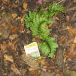 9/28/2010 September garden (11)