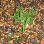 9/28/2010 September garden (12)