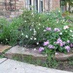 9/28/2010 September garden (13)