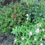 9/28/2010 September garden (14)
