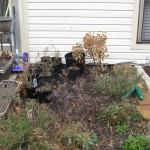 1/15/2011 Early Winter Garden (46)