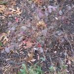 1/15/2011 Early Winter Garden (42)