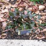 1/15/2011 Early Winter Garden (21)