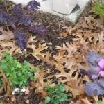 1/15/2011 Early Winter Garden (15)