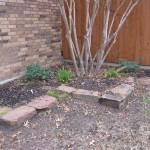 1/15/2011 Early Winter Garden (10)