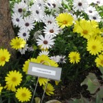 3/19/2011 Dallas Blooms (90)