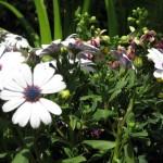 3/19/2011 Dallas Blooms (91)
