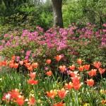 3/19/2011 Dallas Blooms (11)
