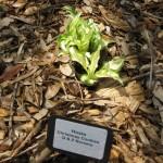 3/19/2011 Dallas Blooms (15)