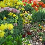 3/19/2011 Dallas Blooms (29)