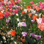 3/19/2011 Dallas Blooms (30)