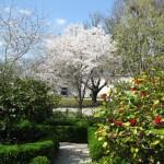 3/19/2011 Dallas Blooms (33)