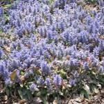 3/19/2011 Dallas Blooms (45)