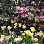 3/19/2011 Dallas Blooms (55)